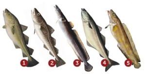 bacalhau-tipos