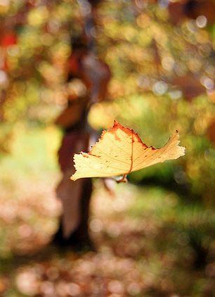 outono-desapego